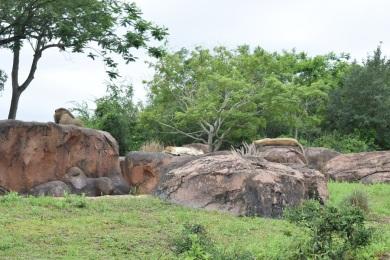 ak-safari2