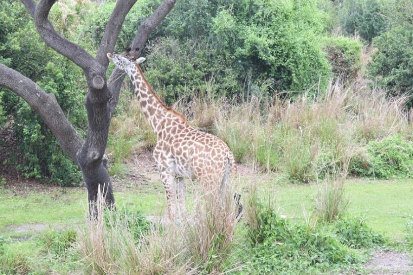 ak-safari5