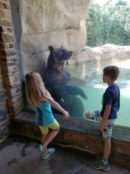 ak-bear