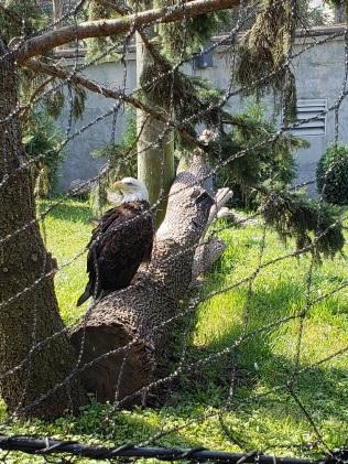 eagle-tol